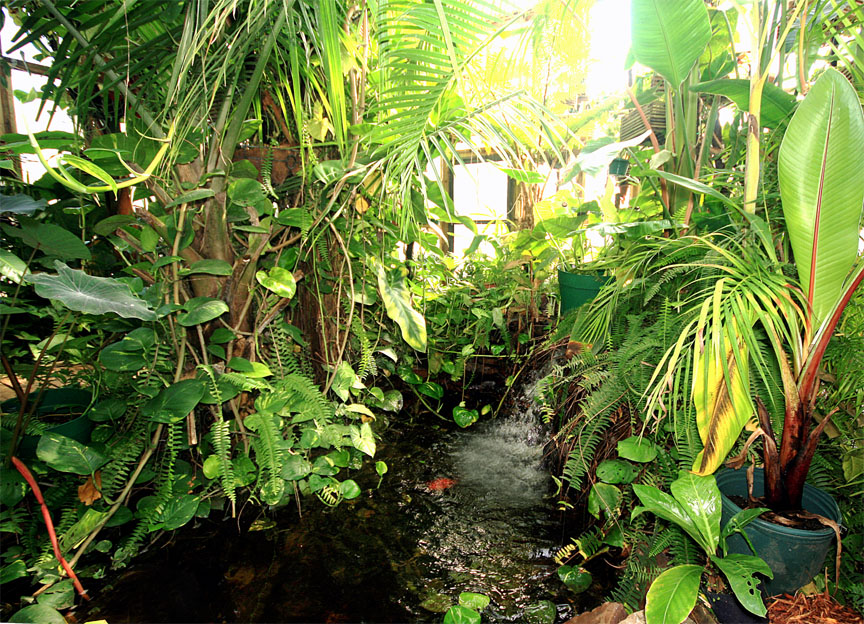 Exotic Rainforest waterfall and pond as seen from the park bench, Photo Copyright 2009, Steve Lucas, www.ExoticRainforest.com