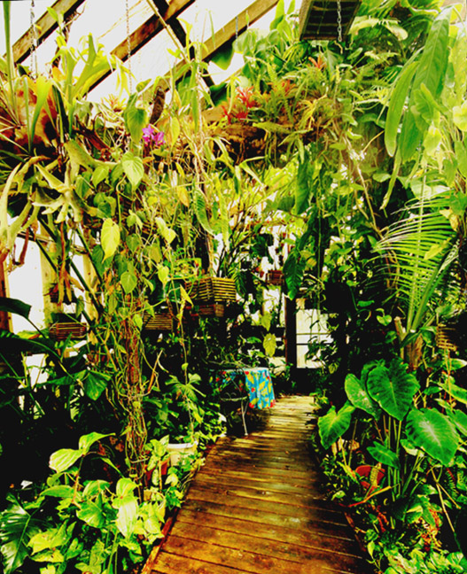 Main walkway to the Exotic Rainforest atrium, Siloam Springs, AR, Photo Coyright 2010, Steve Lucas, www.ExoticRainforest.com