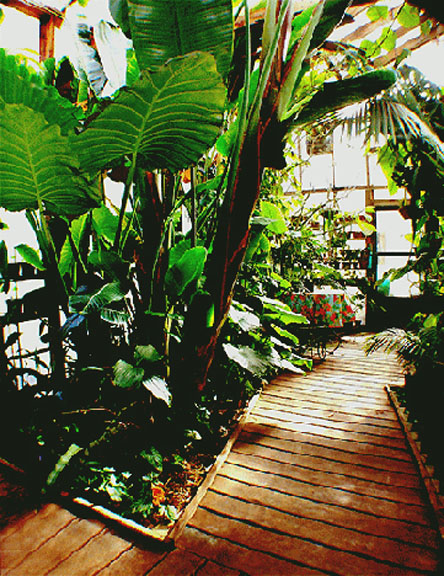 Light and Season in the Exotic Rainforest atrium, Photo Copyright 2006, Steve Lucas, www.ExoticRainforest.com
