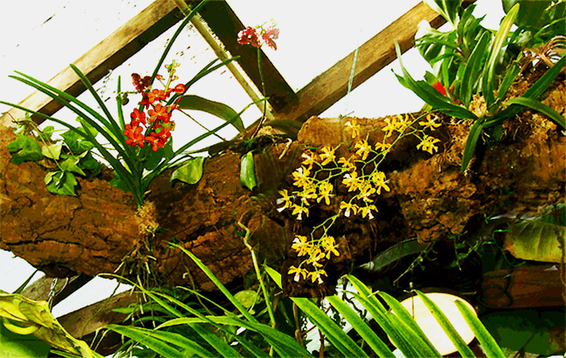 Epiphytic log in the Exotic Rainforest atrium, Photo Copyright Steve Lucas 2007, www.ExoticRainforest.com